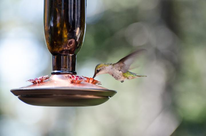 Saving a Hummingbird